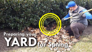 Landscape Crew Member Racking Leaves Out From Under Bush Preparing Yard For Spring