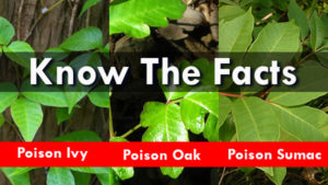 Poison Ivy, Oak, Sumac - Know The Facts