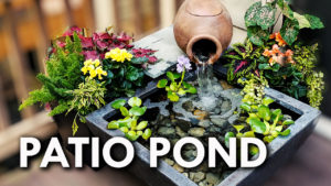 Patio Pond Running Surrounded By Pond Plants